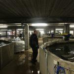 Kalankasvatusaltaita on kasvihuoneen alla osin kahdessa kerroksessa. Altaat on rakennettu lietesäiliöiden komponenteista.