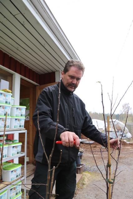 Teppo Kaarniemi on yrittäjänä Hirvensalmen Taimistossa, jonka edellinen yrittäjä Anssi Krannila toi paljon omenalajikkeita Venäjältä ja Baltiasta.